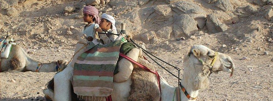 camel bedouin village tour