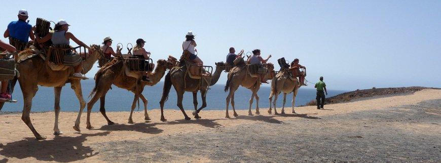 camel riding egypt tour