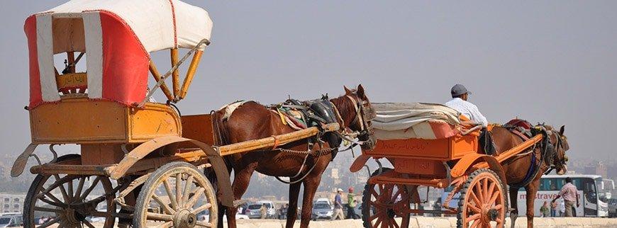 carriage cairo pyramids tour