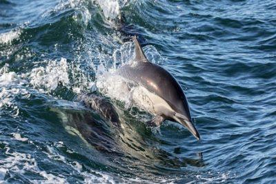 dolphin habitat excursion egypt 400x267 Makadi Bay Ausflüge