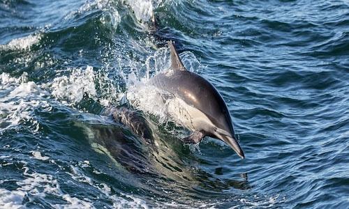 dolphin habitat excursion egypt