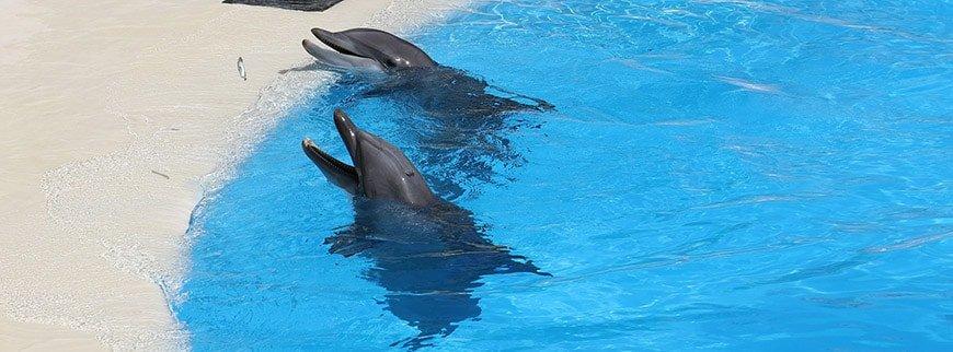 dolphins egypt tour