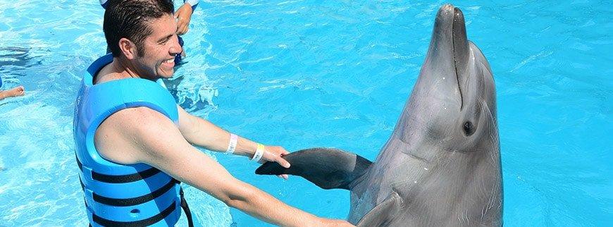 dolphins tour egypt
