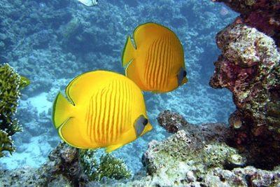 ras mohammed snorkeling tour sharm 400x267 Sharm El Sheikh Shore Excursions