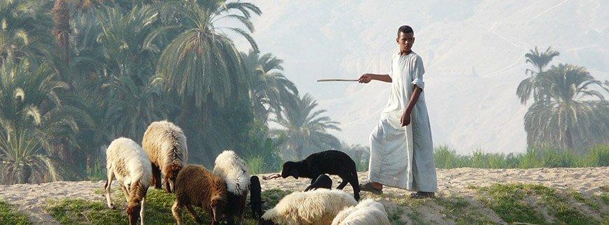 shepherd pharaonic village tour cairo