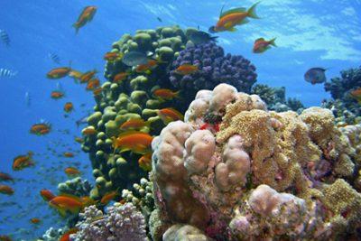 snorkeling sharm el naga 400x267 Sharm el Sheikh Ausflüge