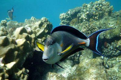 snorkeling tour egypt ras mohammed 400x267 Sharm el Sheikh Ausflüge