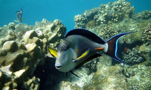 snorkeling tour egypt ras mohammed