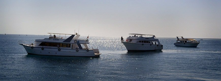 snorkeling with dolphins tour egypt
