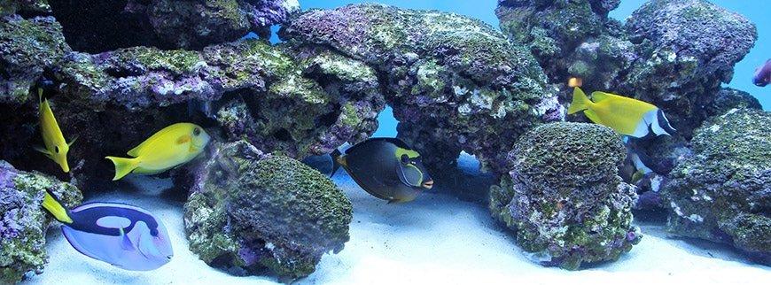 submarine excursion egypt