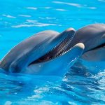 swimming wih dolphins in hurghada 150x150 Home