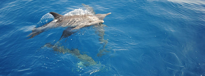 swimming with dolphins egypt excursion