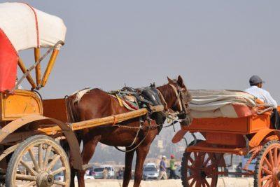 cairo city guide egypt horse carriage 400x267 Excursiones El Cairo