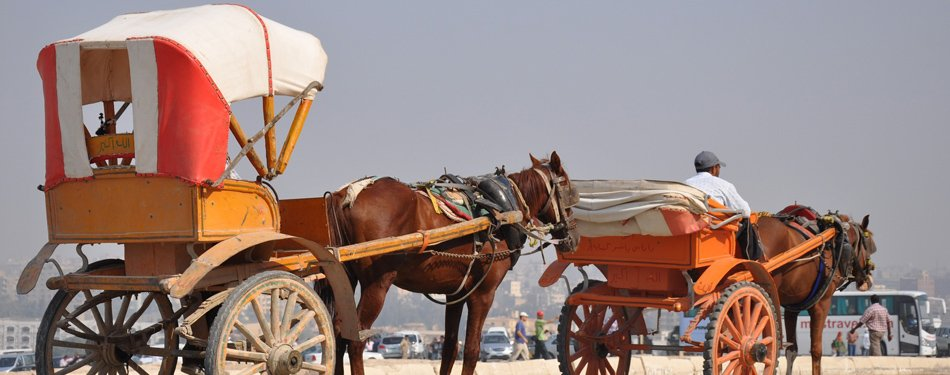 cairo city guide egypt horse carriage